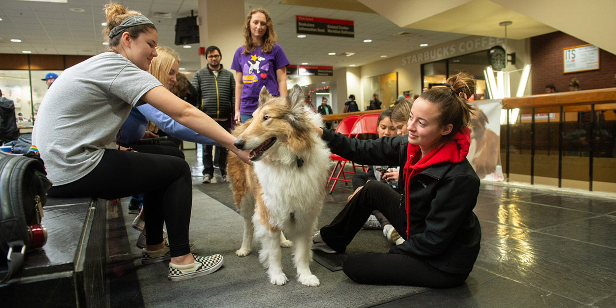 SIUE Students petting dogs.