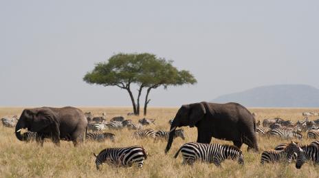 Serengeti park 2019