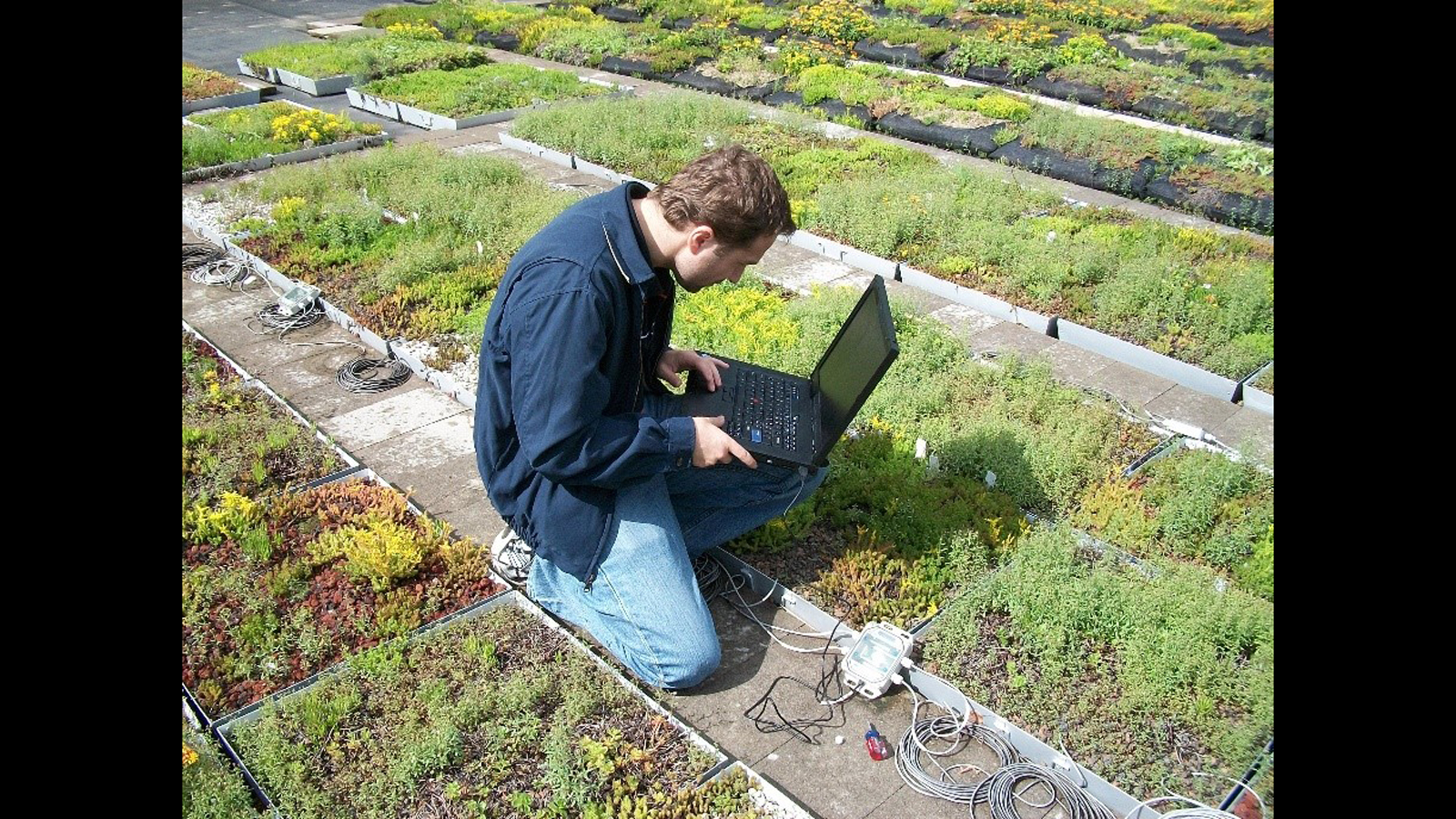 Energy Saving Analysis of Green Roofs