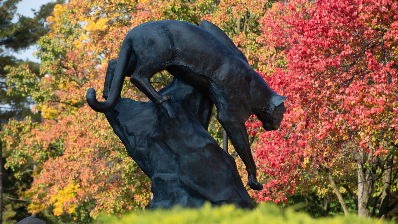 SIUE Cougar statue on campus