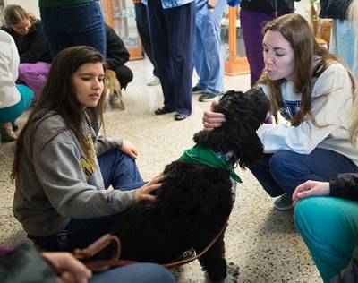 (L-R) SIU SDM students Dallas Pineda and Maggie McCarthy enjoy a visit from therapy dog, Elsa, a Portuguese Water Dog.