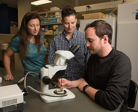 SIUE's Faith Liebl, PhD, (left) works with students Sara Comstock (middle) and Joshua Preston (right) on her research that has received a $422,064 grant from the National Institutes of Health.