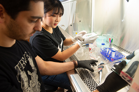 Student researchers Hyeyeoung Seo (Dongguk University) and Carl Namini (SIUE) prepare cell cultures for detection of endocrine disrupting chemicals.