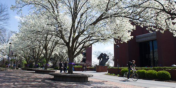 flowering trees on SIUE campus