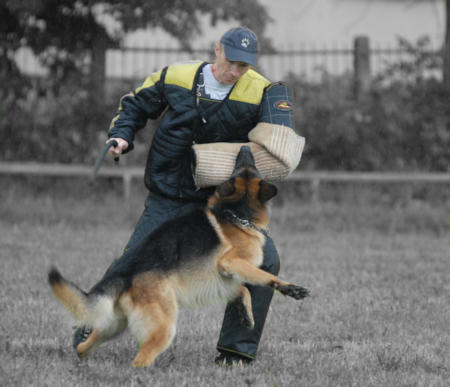 german shepherd protection training german shepard 3079